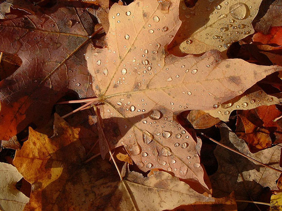 Fall Season Desktop Wallpaper Why Trees Shed Their Leaves Earth Earthsky