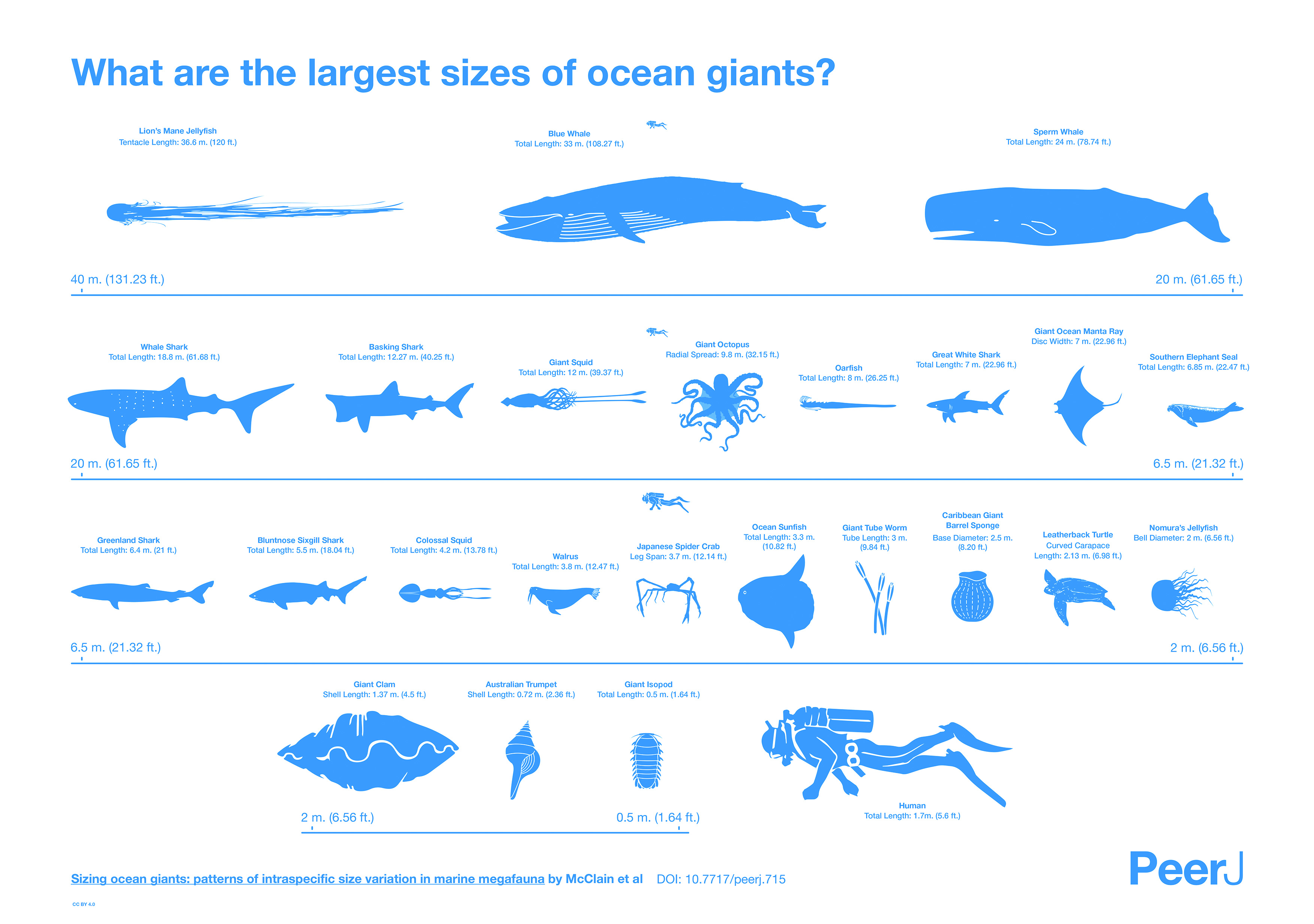 See Comparative Sizes Of Ocean Giants