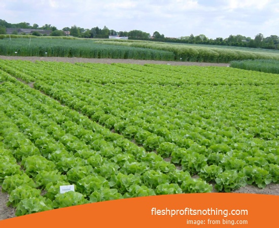 [NEW] Getting Started Tips Of Agriculture Crops Food