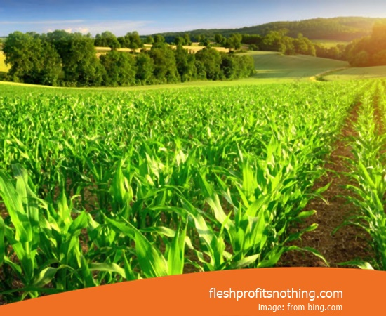 Here Are Some Types Of Agribusiness Farming