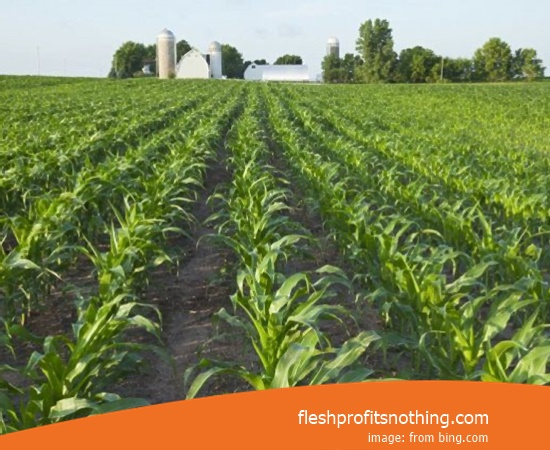 Here Are Some Advantages Of Agriculture Services Business