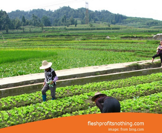 Here Are Some Advantages Of Agriculture And Plantation
