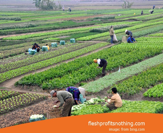 Here Are Some Advantages Of People Agricultural Business