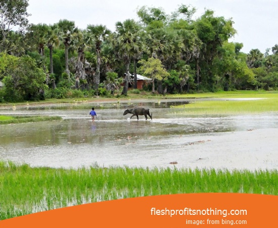 Here Are Some Types Of Rice Paddy Farm