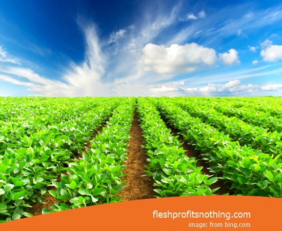 Location Sales Tools Hydroponic Farming