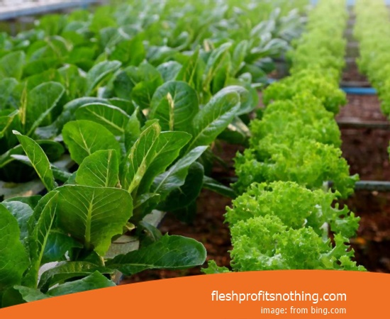 Here Are The Kinds Opportunities Of Agricultural Products