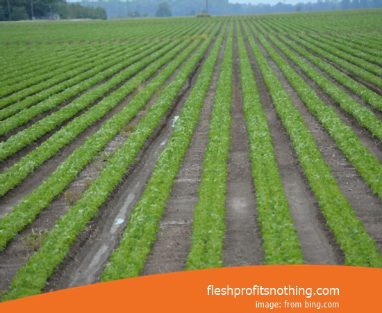 Location Dealer Machine Farms In Kediri