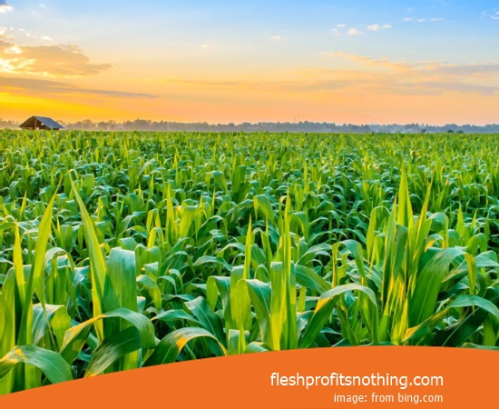 Here Are Some Types Of Agriculture And Plantation Business