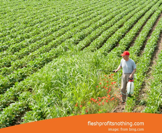 Here Are The Kinds Opportunities Of Agricultural Crops