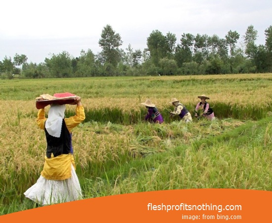 Location Workshop Machine Rice Paddy Farm