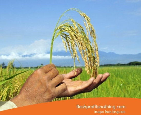 Place Sales Tools Farms In Lampung
