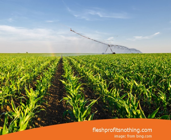 Here Are The Kinds Opportunities Of Agricultural Fast Harvest