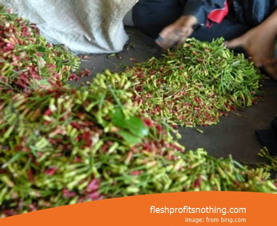 [Update!] Price Of Clove Seed Today In Manado