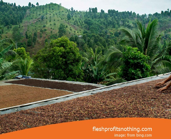 Location Farm Agro Tourism Of Dried Clove Seeds In West Java