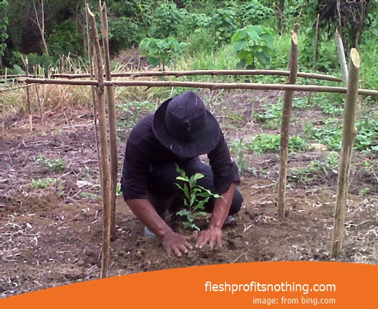 Location Plantation Of The Clove Seed Makassar