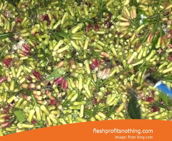 Location Plantation Of ACEH Clove Seed