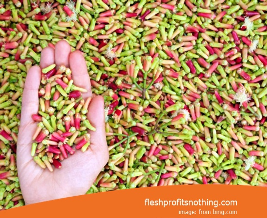New Varietas Of Export Clove Seeds