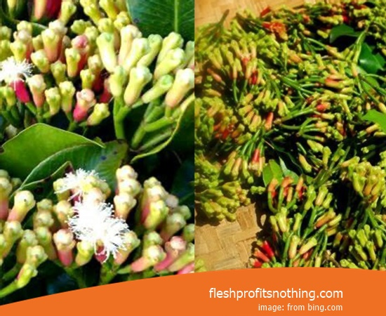 New Varietas Of Latest Clove Flower In Makassar
