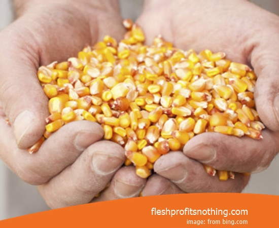 Price Buy of Latest Colorful Corn Seeds