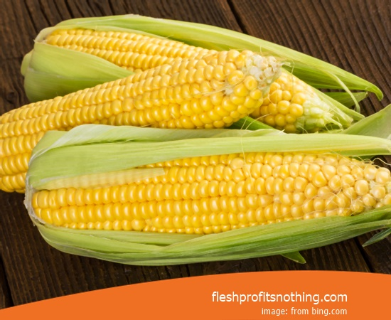 New Varieties of Corn Seedlings 959 Latest