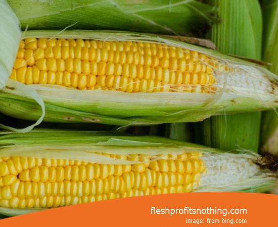 New Varieties of Best Sweet corn Seedlings