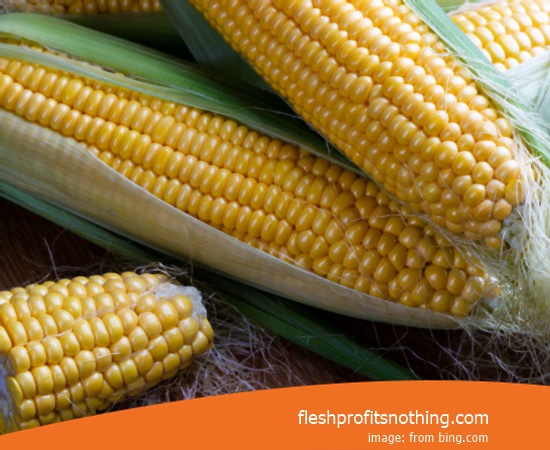 Price Sell of P36 Latest Corn Seeds
