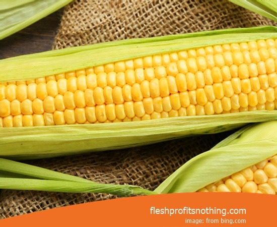 Price Buy of heirloom Corn Seeds Canada
