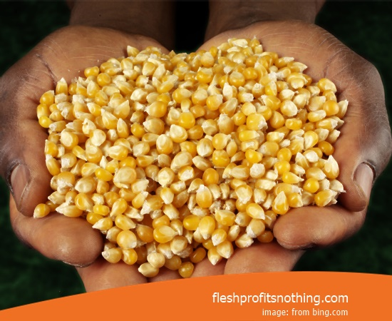 Price Buy of japanese Corn Seeds