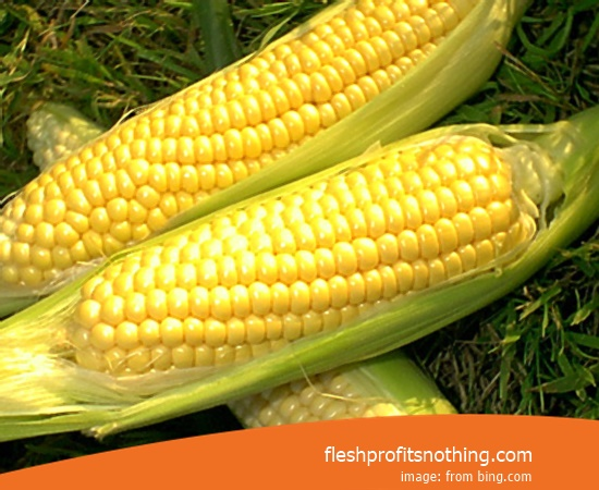 Price Buy of 18 Terbar Corn Seeds