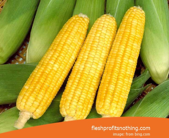 Price  of Eight Row Flint Corn Seed