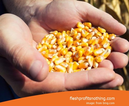 Cost Buy of Corn Seeds Per Hectare