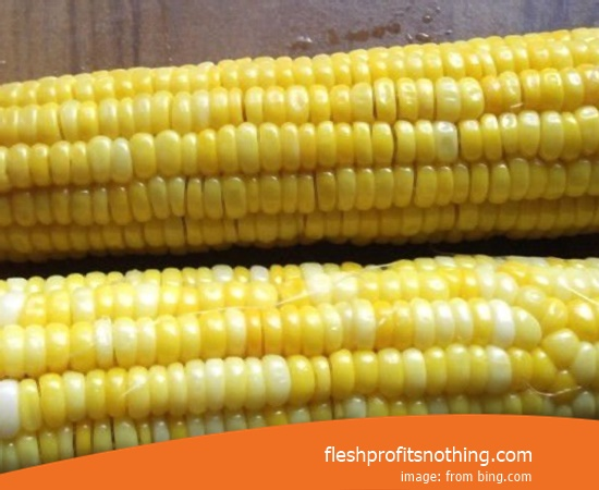 New Varieties of Corn Seeds For Planting