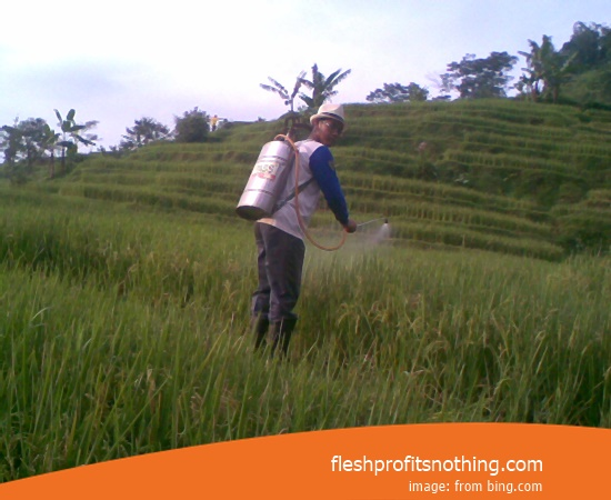 Price Seed Rice Of Gajah Mada Inpari 9 Per Kg
