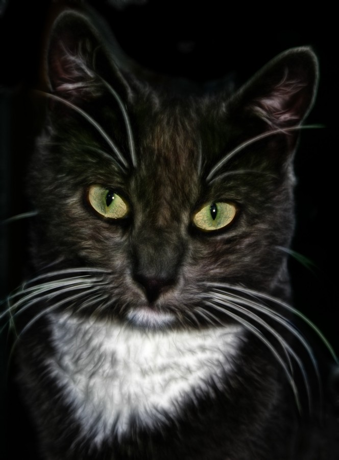 Cute Drawings Wallpapers Of Cats Image Of Close Up Of Cat In Hdr 【free Photo】 100010481