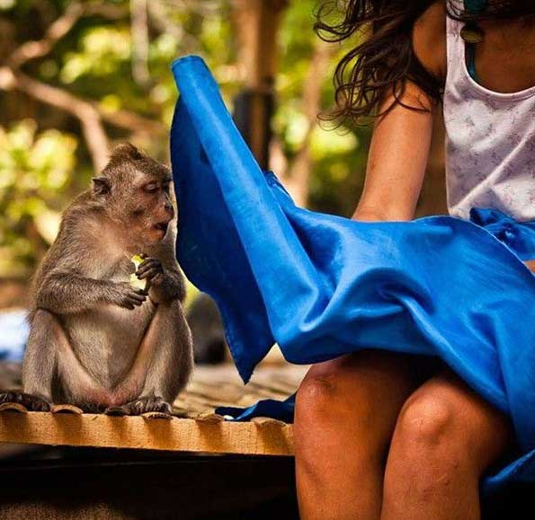 Monkey and Woman in Perfectly Timed Photo