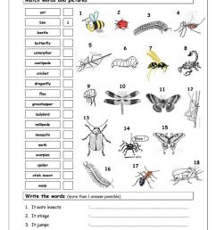 insect body parts insects worksheets and homeschool minibeasts activities and games for eyfs ks1 sparklebox [ 763 x 1079 Pixel ]