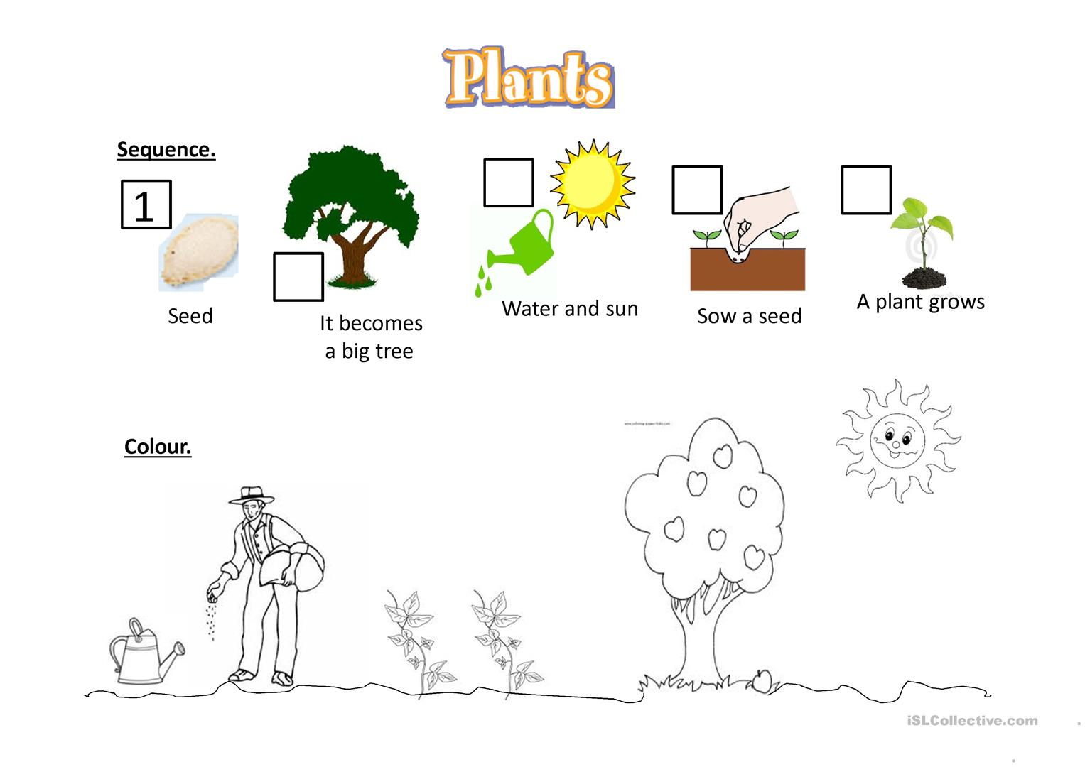 A Seed Becomes A Tree Worksheet