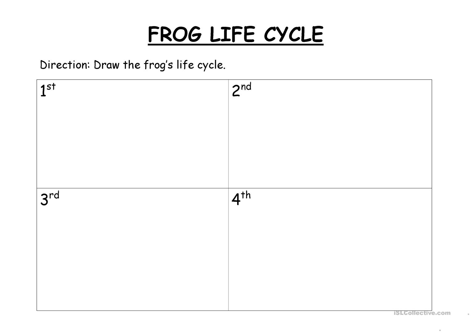 Frog S Life Cycle Worksheet