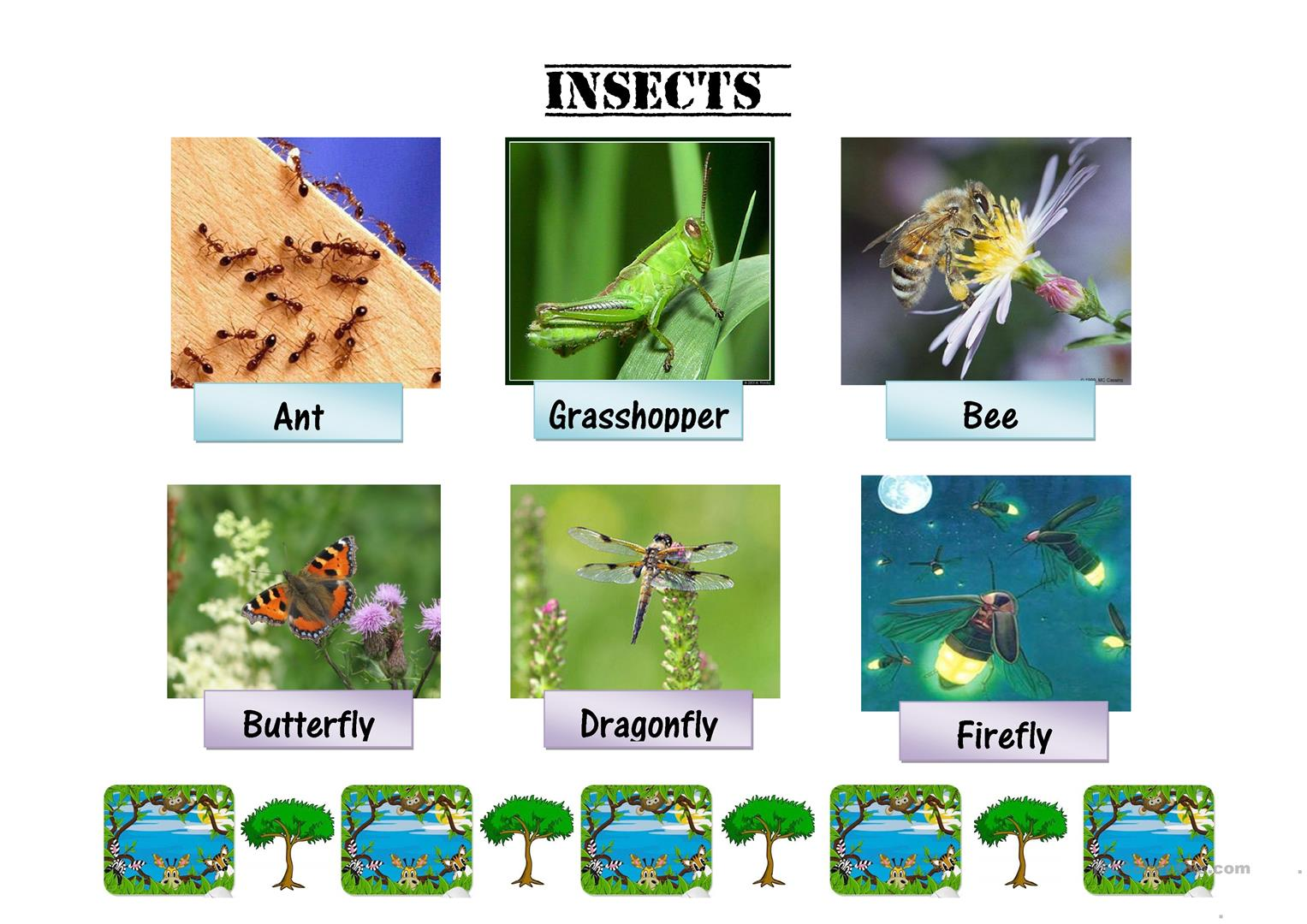 Insects Flash Cards Worksheet