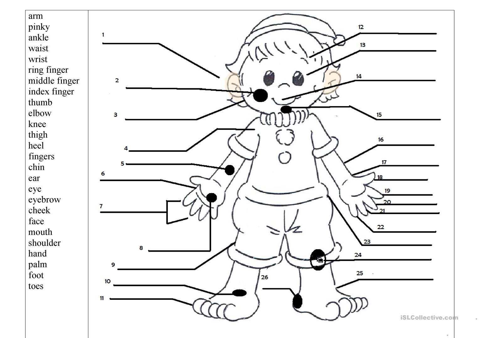Printable Worksheet Body Parts Face