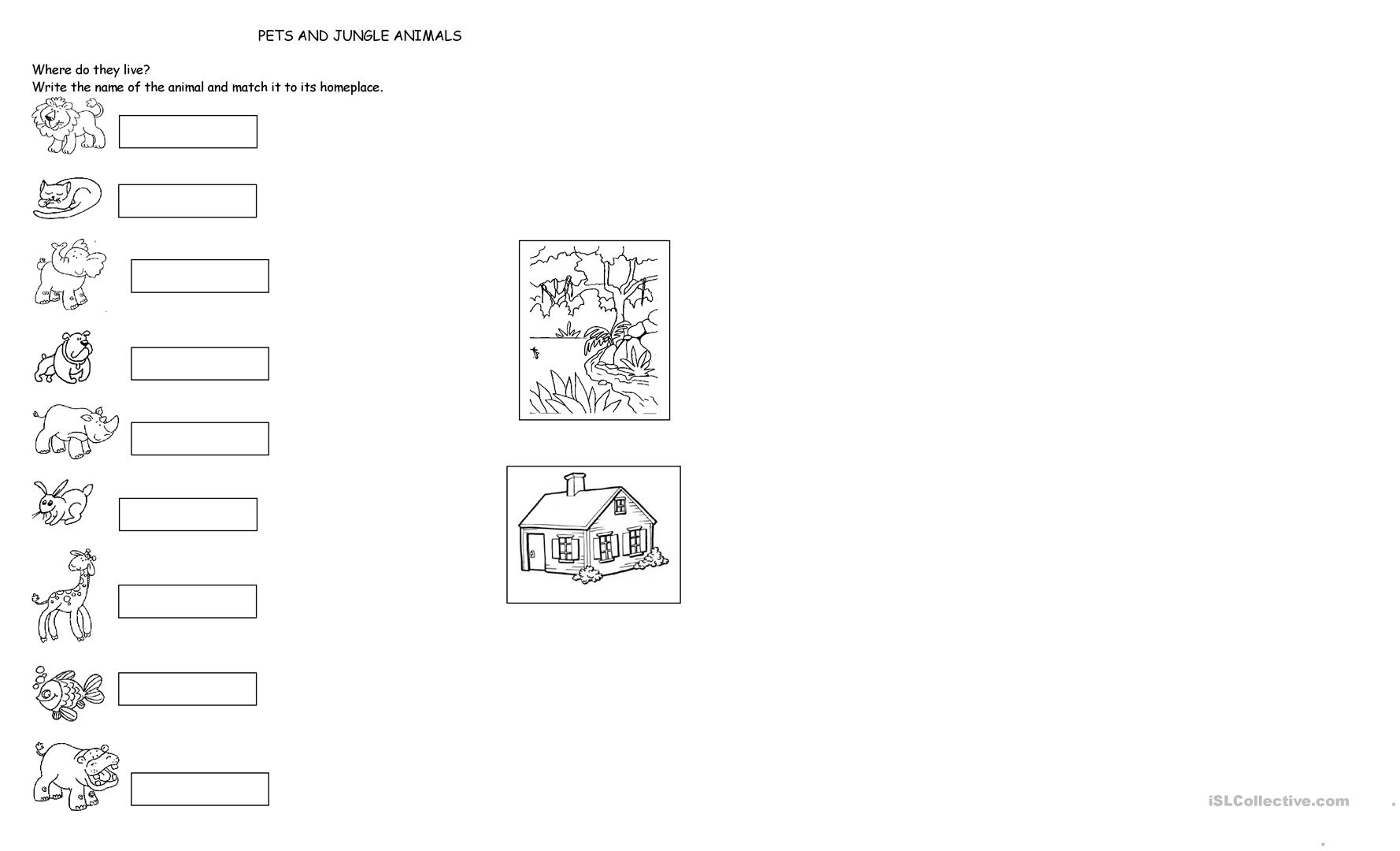 Jungle Animals And Pets Worksheet
