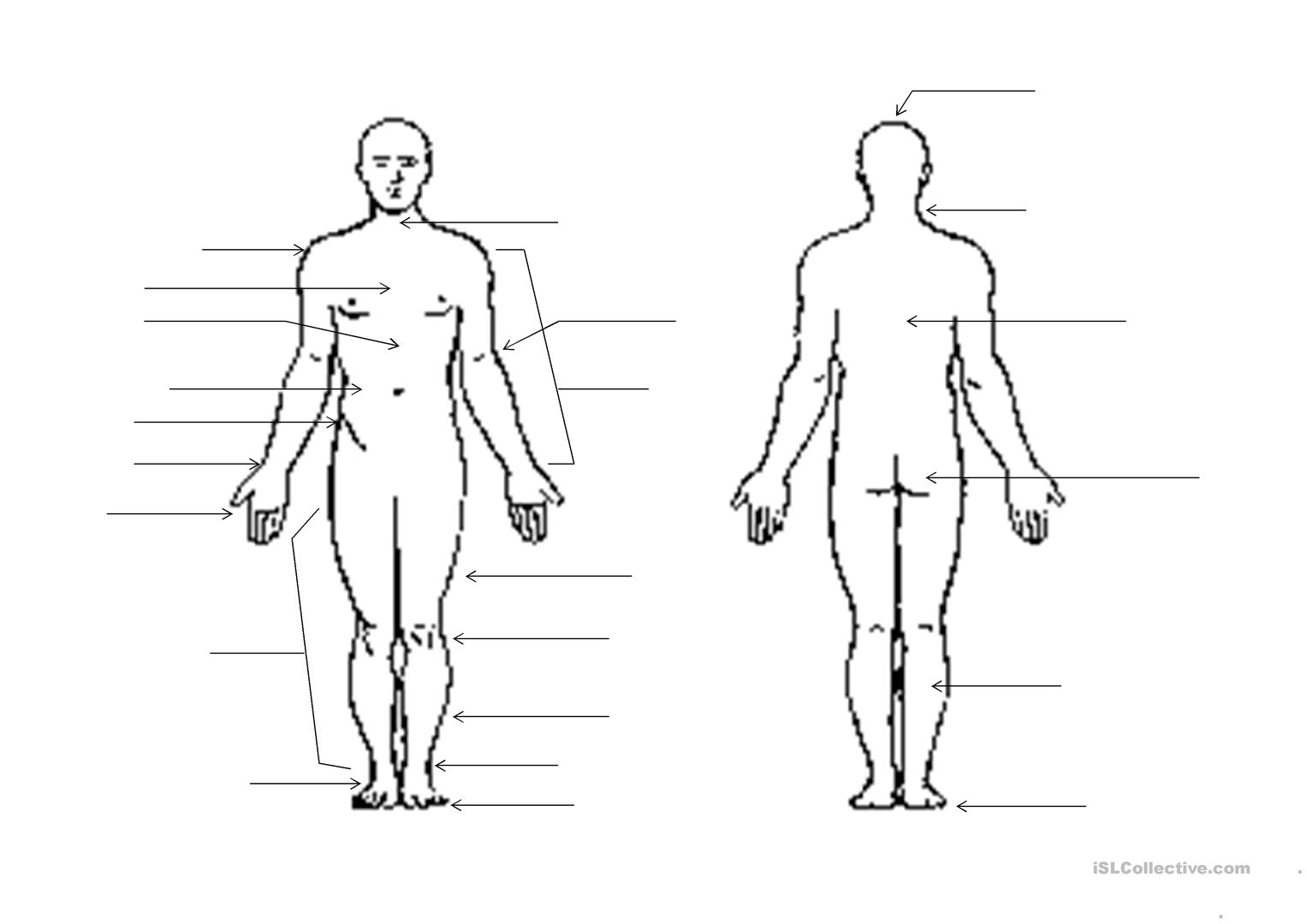 Human Body Outline Worksheet