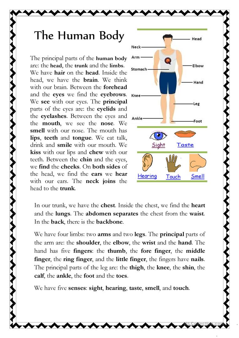 The Human Body - English ESL Worksheets for distance learning and physical classrooms