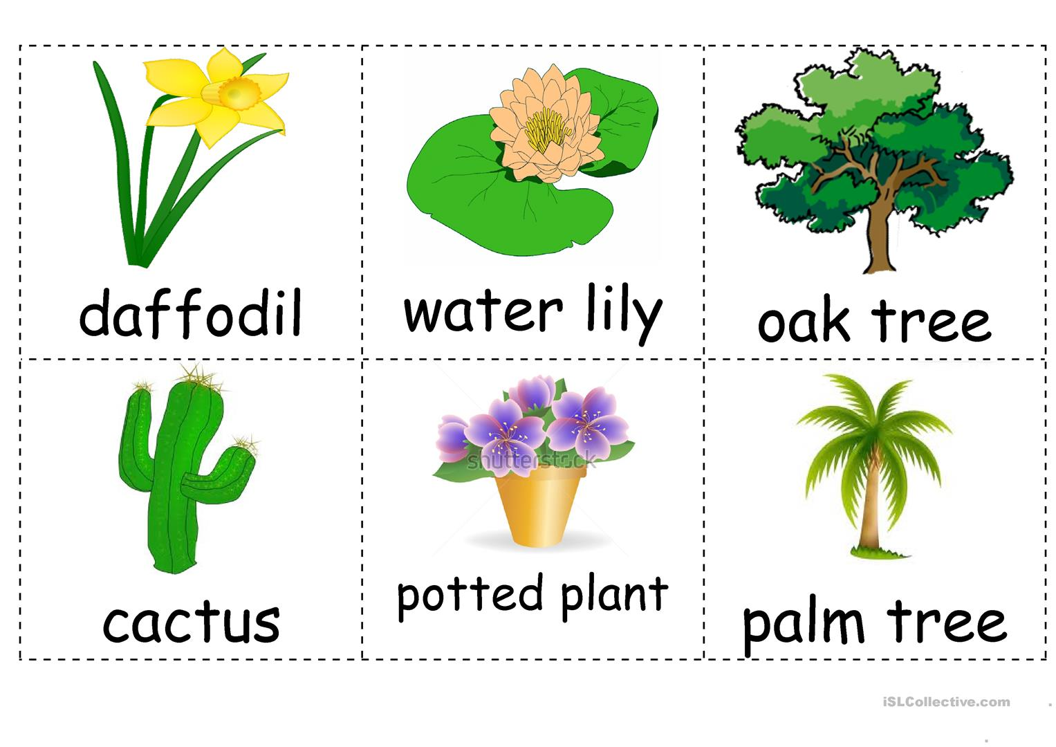 Where Do Plants Grow Worksheet