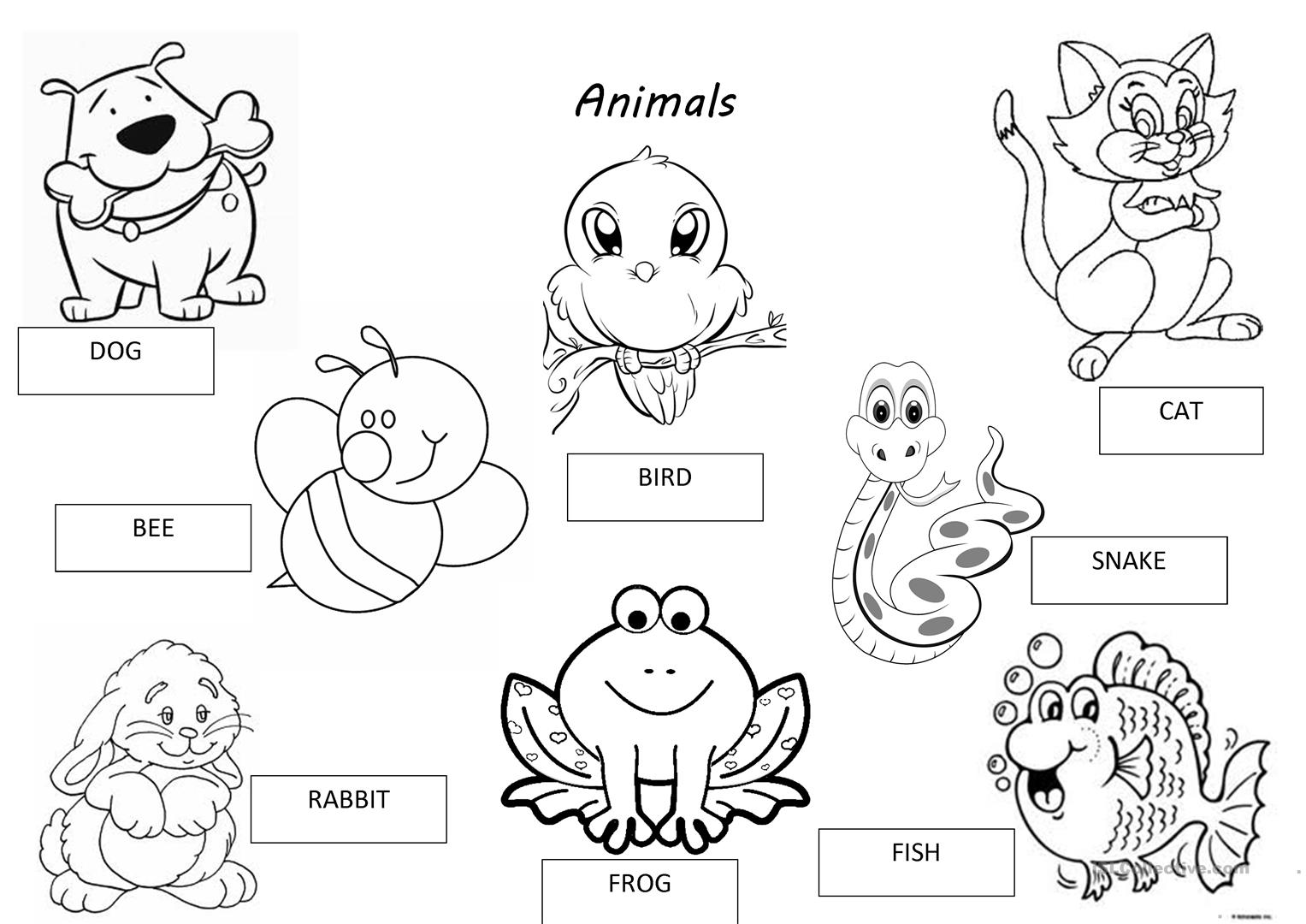 Sorting Animals Worksheet