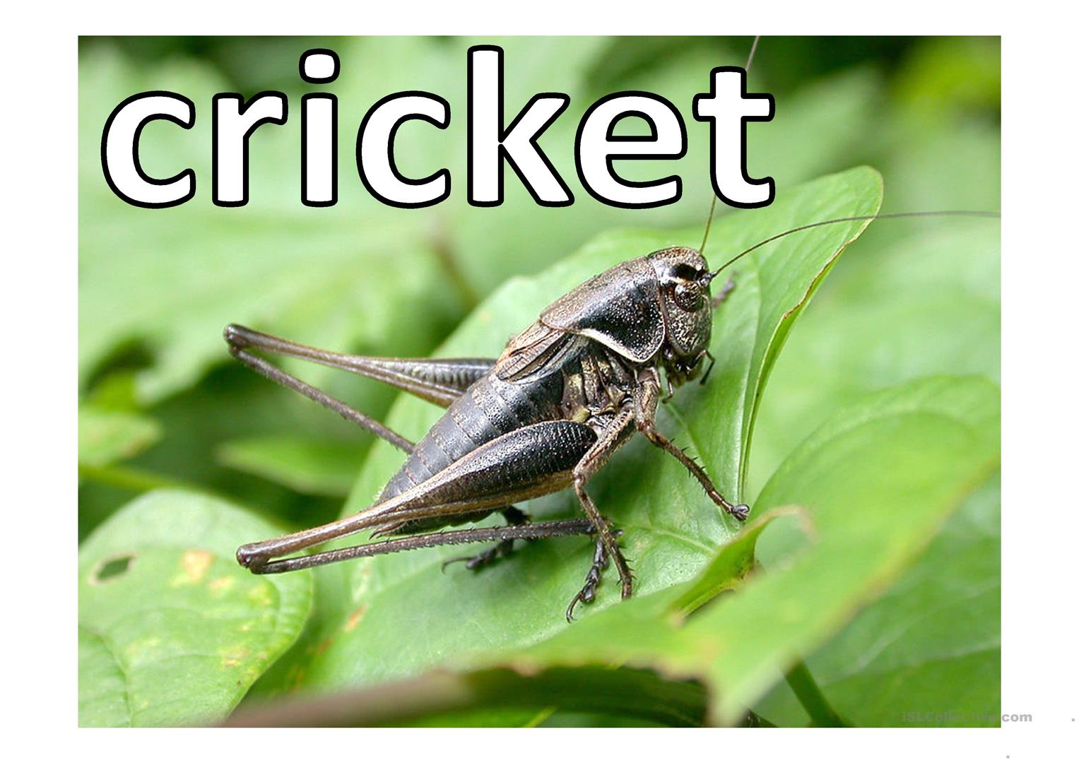 Insects Ppt Worksheet