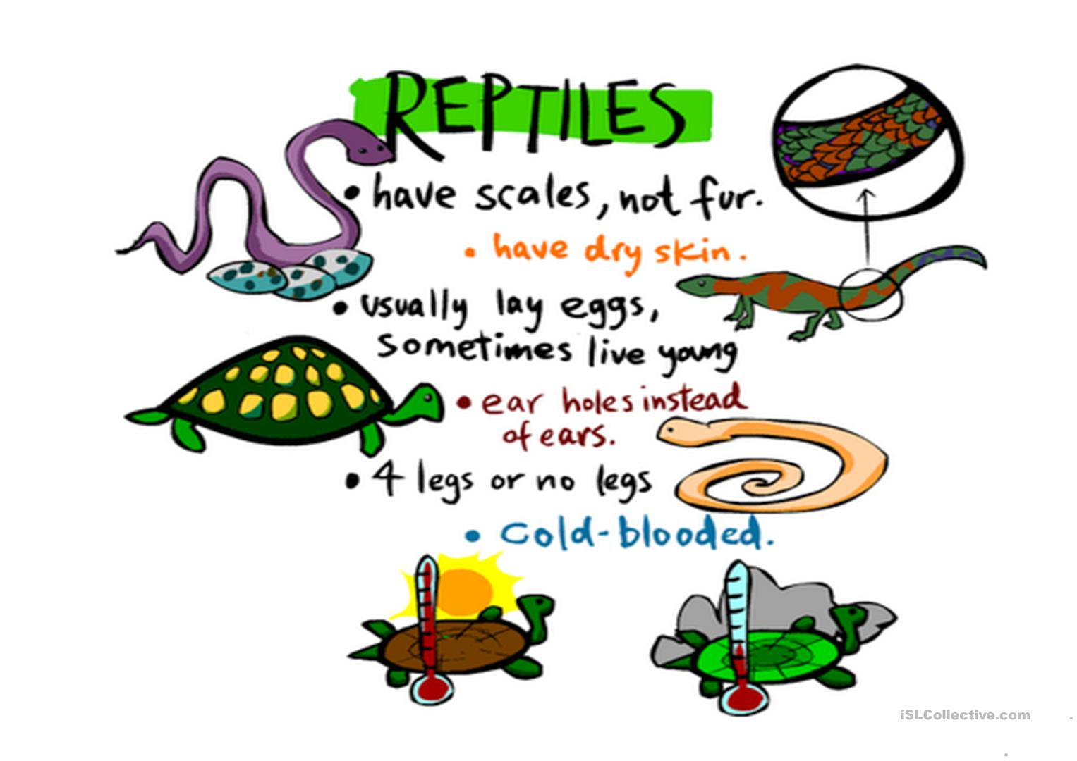 Science Animals Worksheet