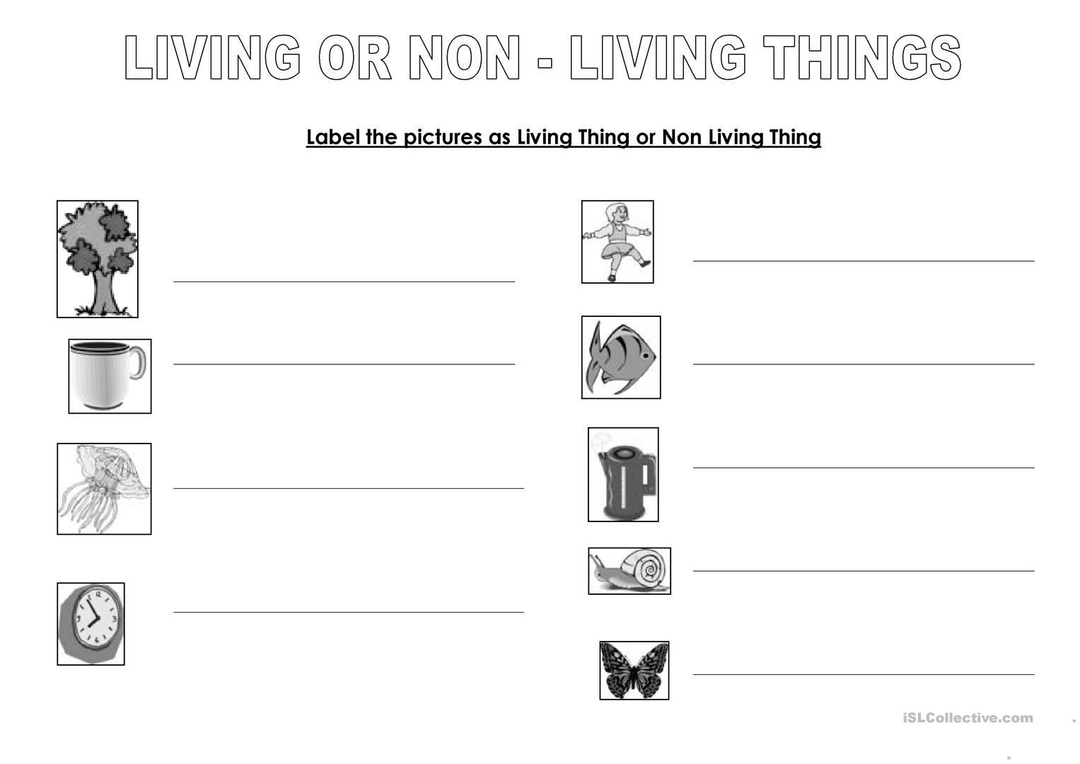 Living Or Non Living Things Worksheet