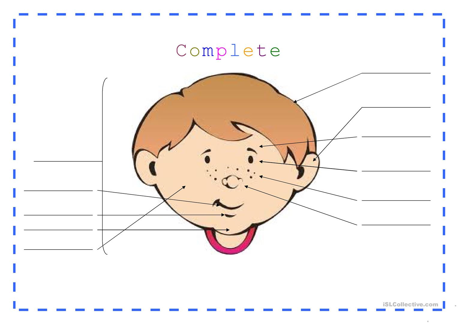 The Head And The Face Worksheet
