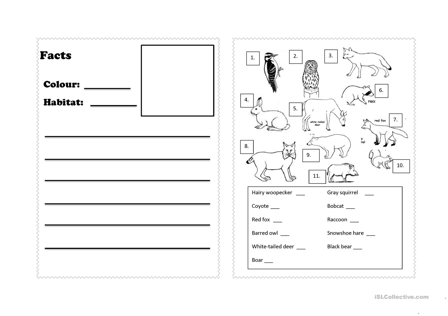 Forest Animals Worksheet